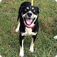 Adopt A Pet :: Sadie - Trenton, NJ