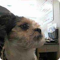 Adopt A Pet :: BOOMER - Plano, TX