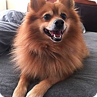 Adopt A Pet :: TEDDY! - Philadelphia, PA