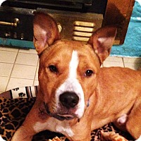 Adopt A Pet :: Willie - Memphis, TN