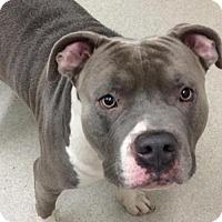 Adopt A Pet :: Mishka - Spokane, WA