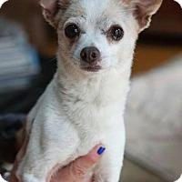Adopt A Pet :: Roscoe - Matthews, NC