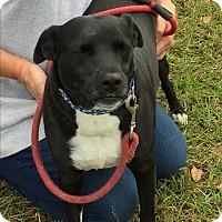 Adopt A Pet :: Milan - Folsom, LA
