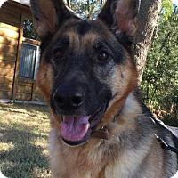 Adopt A Pet :: Sandy - Ormond Beach, FL