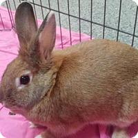 Adopt A Pet :: Sunny - Lowell, MA