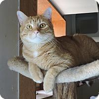 Adopt A Pet :: Archie - MARENGO, IL
