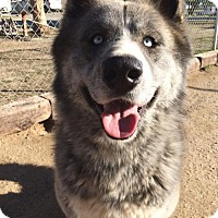 Adopt A Pet :: Sterling - Romoland, CA