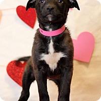 Adopt A Pet :: Hannah - Waldorf, MD