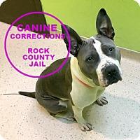 Adopt A Pet :: Sydnee - Janesville, WI