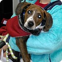 Adopt A Pet :: Bonnie - Hermitage, TN