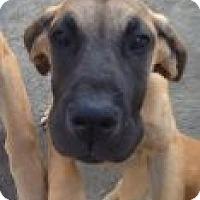 Adopt A Pet :: CASSANDRA - Atascadero, CA