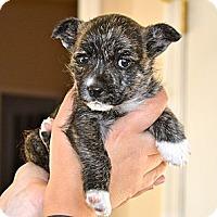 Adopt A Pet :: Bianca - Knoxville, TN