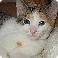 Adopt A Pet :: Speckle - Medina, OH