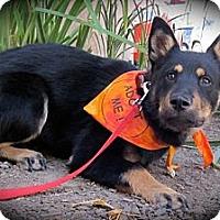 Adopt A Pet :: SUZETTE - san diego, CA