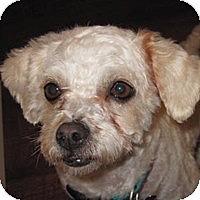 Adopt A Pet :: Cocoa - La Costa, CA