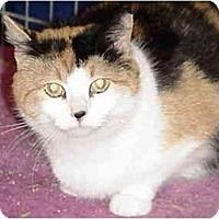 Adopt A Pet :: Blossom&Petal - Chesapeake, VA