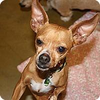 Adopt A Pet :: Floyd - Rohnert Park, CA