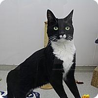 Adopt A Pet :: Rocky - Newport Beach, CA