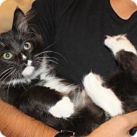 Adopt A Pet :: Rose - Irvine, CA