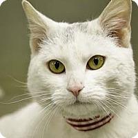 Adopt A Pet :: Lucius - Merrifield, VA