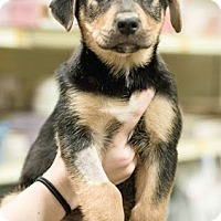 Adopt A Pet :: Packer - Gainesville, FL
