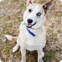 Adopt A Pet :: Jax - Peachtree City, GA