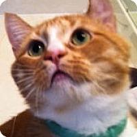 Adopt A Pet :: Morris - Columbia, SC