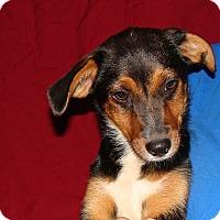 Adopt A Pet :: Elroy - Oviedo, FL
