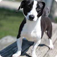 Adopt A Pet :: Donald - South Haven, MI
