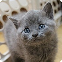 Adopt A Pet :: Parker - Littleton, CO