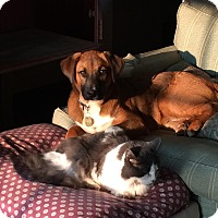 Adopt A Pet :: Finley in New England - Ascutney, VT
