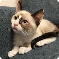 Adopt A Pet :: Coco - Pleasant Hill, CA