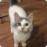 Adopt A Pet :: Chrissy - Gainesville, FL