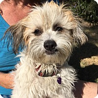 Adopt A Pet :: JULIE - Los Angeles, CA