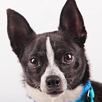 Adopt A Pet :: Buster - Colorado Springs, CO