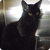 Adopt A Pet :: Eightball - Chambersburg, PA