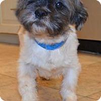 Adopt A Pet :: Stratus Barkley - Urbana, OH
