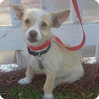 Adopt A Pet :: Rupert (BH) - Santa Ana, CA