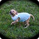 Adopt A Pet :: Marc Antony