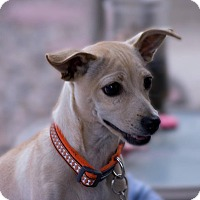 Adopt A Pet :: Einstein - Tijeras, NM
