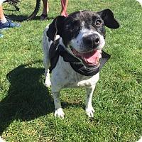 Border Collie/Cattle Dog Mix Dog for adoption in San Diego, California - Chloe