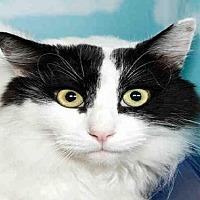Adopt A Pet :: ROCKY - Alameda, CA