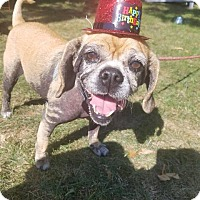 Adopt A Pet :: Suzi - Berea, OH