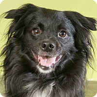 Adopt A Pet :: Georgio - Chicago, IL