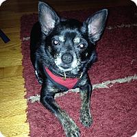 Adopt A Pet :: Bubba - East Hartford, CT