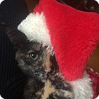 Adopt A Pet :: Jane - Chapel Hill, NC
