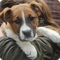 Adopt A Pet :: Bobby - Effort, PA