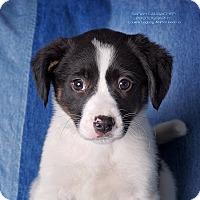 Adopt A Pet :: Aria - Cincinnati, OH