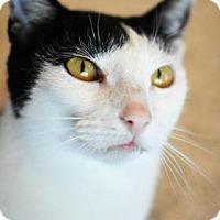 Adopt A Pet :: Celine - Aiken, SC