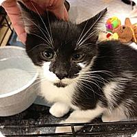 Adopt A Pet :: Shauna - Fort Lauderdale, FL